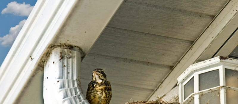 Three Reasons You'll Hate Your Gutter Protection System